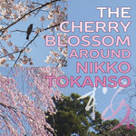 The Cherry Blossom around Nikko Tokanso